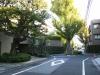 ①−10-1近衛邸ケヤキ